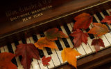 Autumn courses and workshops